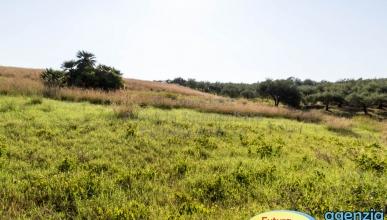 Rif. 461 - Furnari - Terreno agricolo con deposito annesso
